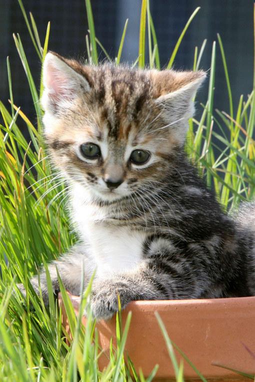 Ces b b s animaux sont tellement mignons qu 39 ils vont vous faire craquer album photo aufeminin - Image de chaton trop mimi ...