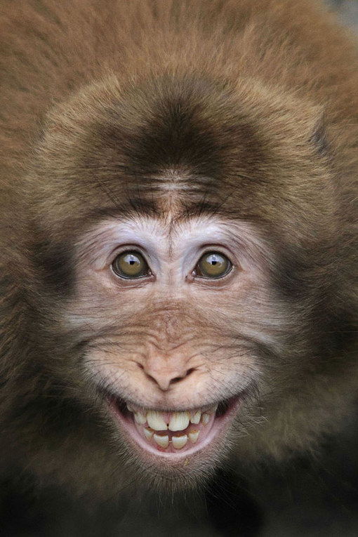 Funny Animals Cute And Hilarious Photos