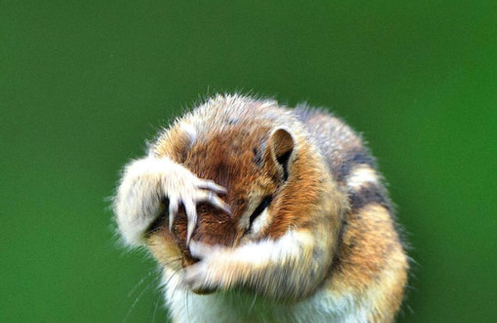 Funny animals: Cute and hilarious photos