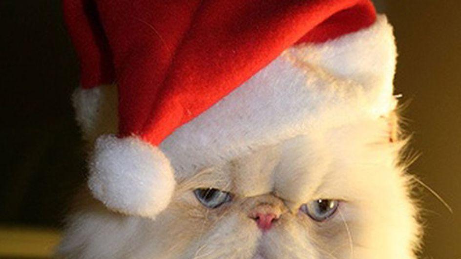 Animaladas navideñas: las mascotas más entrañables