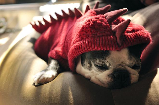 Die coolsten Halloween-Kostüme für Hunde