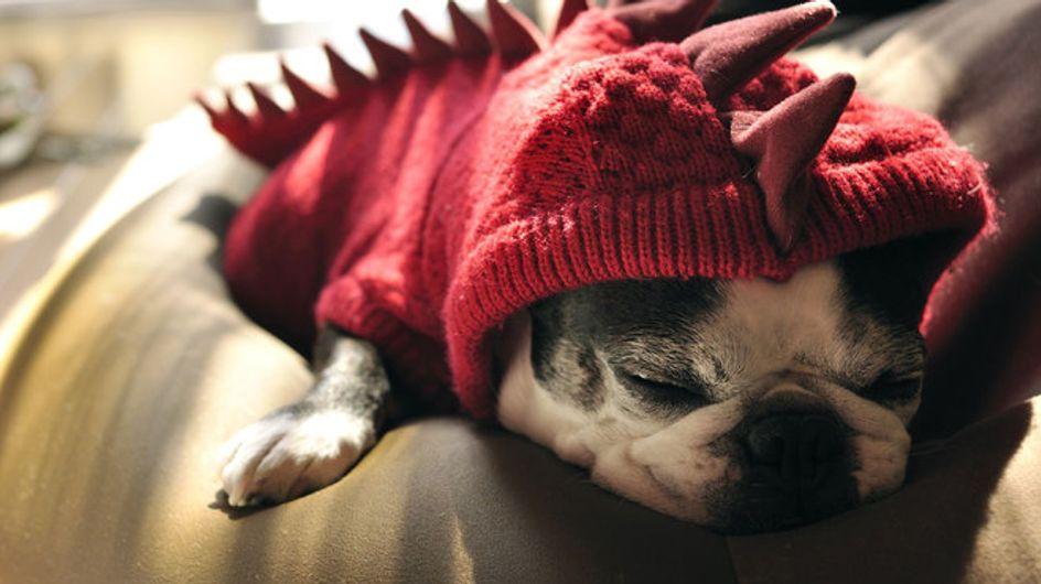 Wau, wie witzig! Die coolsten Halloween-Kostüme für Hunde