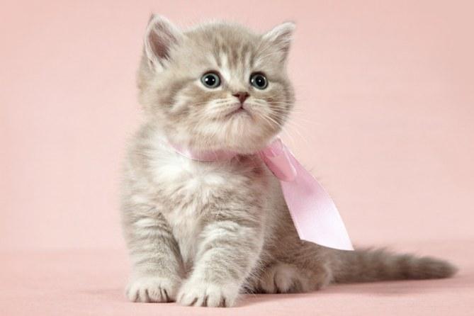 30 noms en L qui raviront les chats femelles
