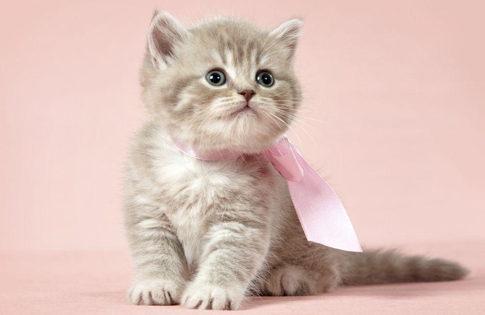 Die 30 schönsten Katzennamen mit « L »