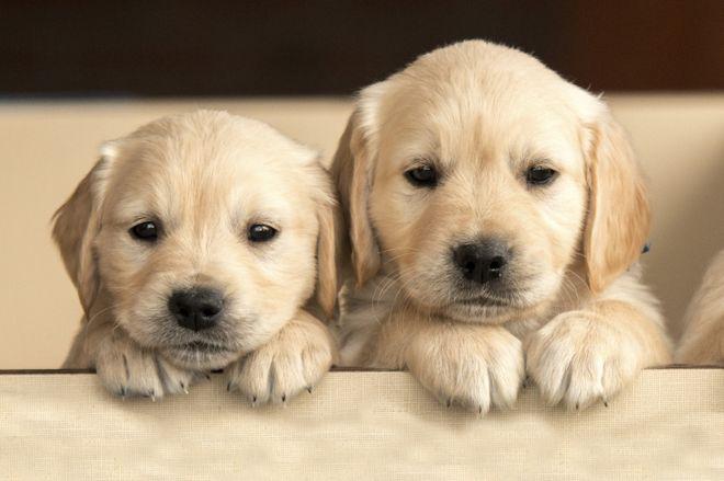 Männliche Hundenamen mit L: Wie soll mein Rüde nur heissen