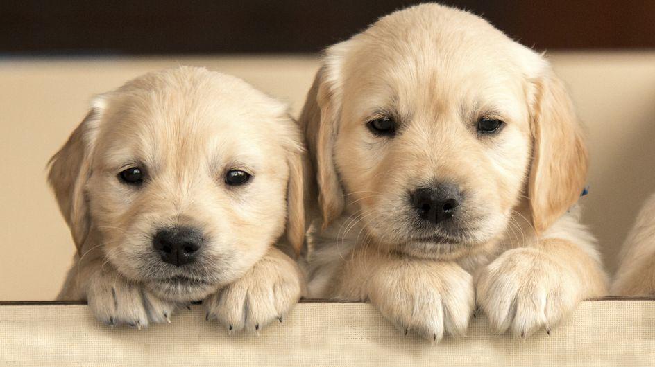 Männliche Hundenamen mit L: Wie soll mein Rüde nur heissen?
