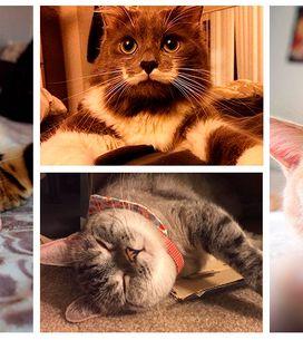 Os gatos mais adoráveis do Instagram