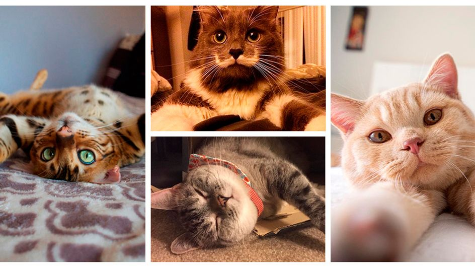Os gatos mais adoráveis do Instagram