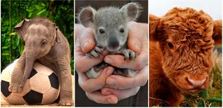 14 fotos de filhotes muito fofos!