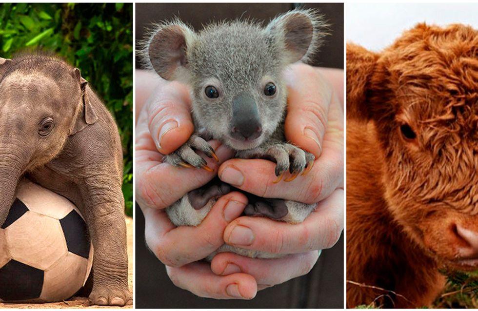 14 fotos de filhotes que deixarão seu dia mais feliz