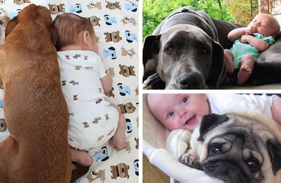 35 foto coccolose di cuccioli e neonati