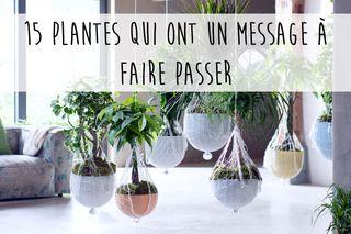 Langage des plantes : 15 plantes qui ont un message à faire passer