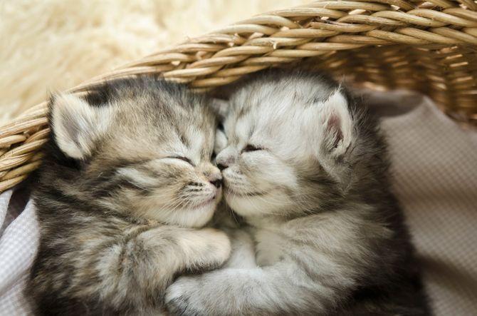 Abbraccio tra due gattini neonati
