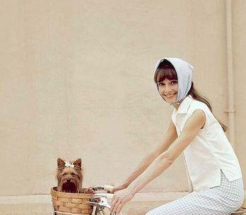 Dog Lover: você precisa ver estas adoráveis fotos...