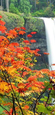É outono no Hemisfério Norte! Veja destinos de viagem nos EUA