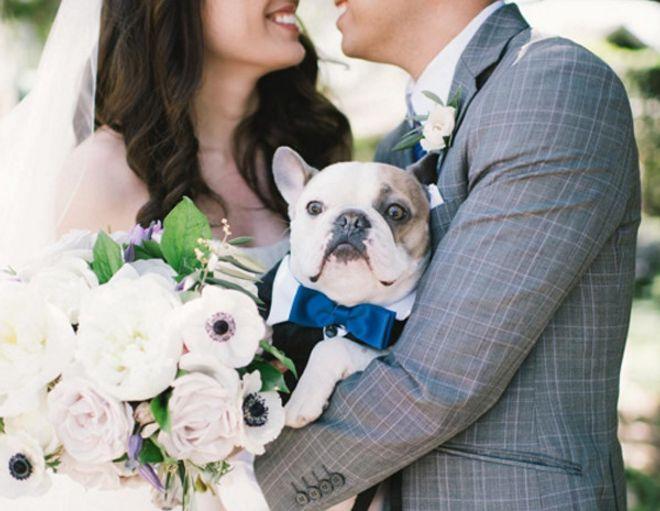 #Instadog: Cachorros em casamentos