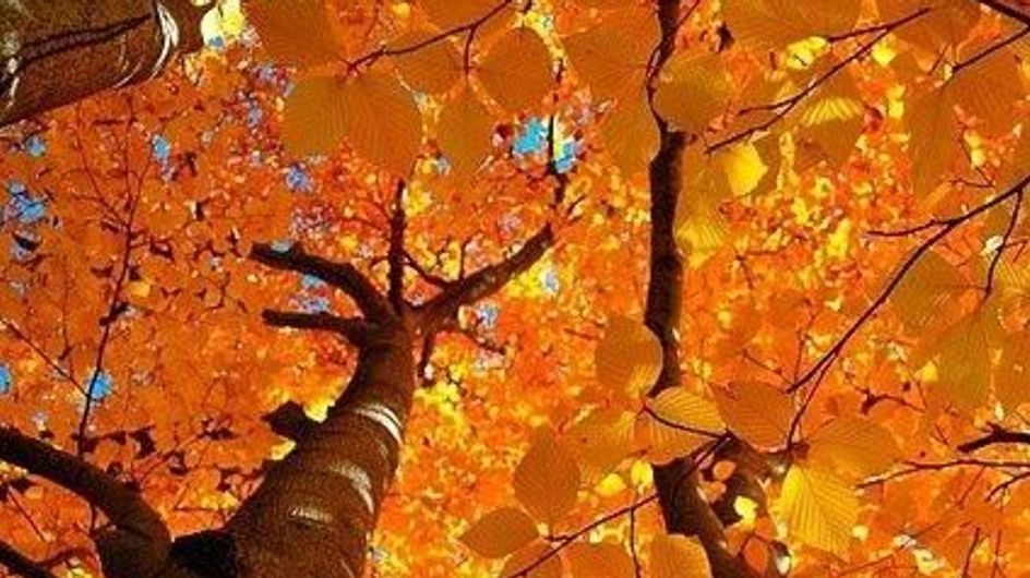 15 immagini che raccontano la magia del foliage autunnale