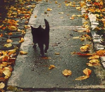 Gatinhos pretos comemorando o Halloween