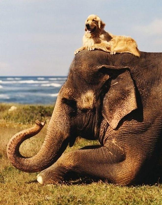 Amizades inusitadas do mundo animal que vão derreter seu coração