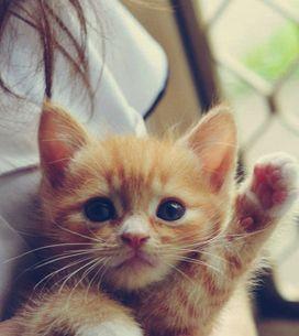 Por que gatos são os melhores pets