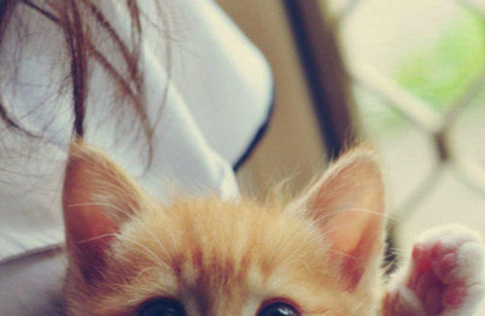 Por que gatos são os melhores pets <3