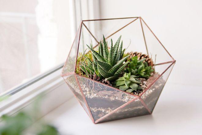DIY: Suculentas na decoração