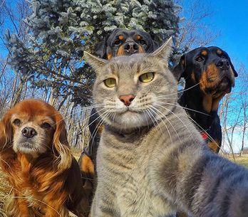 80+ selfies de animais (!) para alegrar seu dia