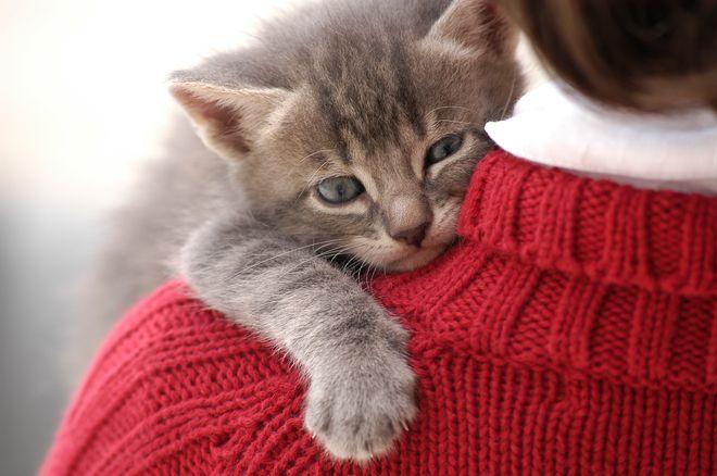 Nomi per gatti maschi: i più belli!