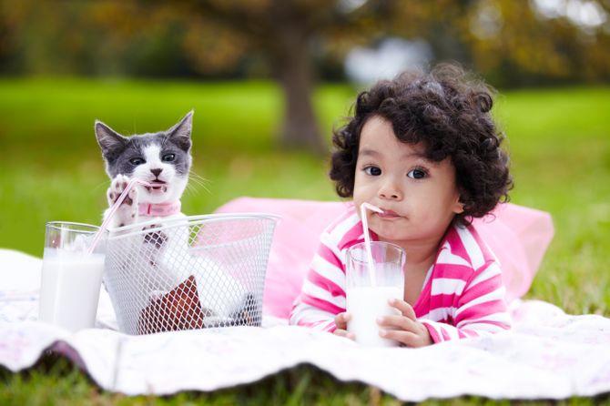 Nomi per gatti femmine: i più belli tra cui scegliere!