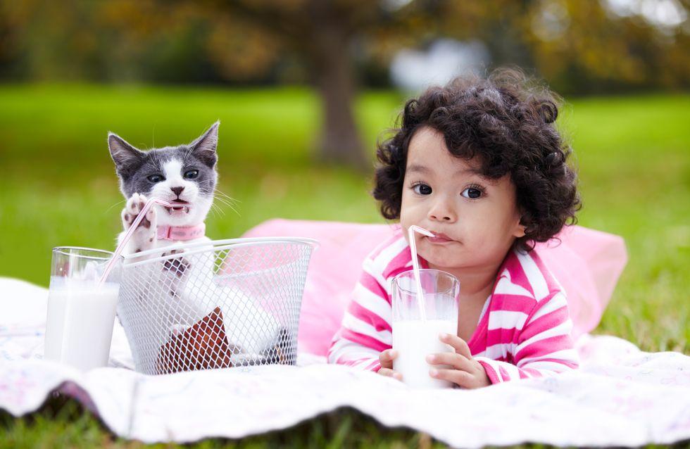 Nomi per gatti femmine: i più belli per la tua gattina!