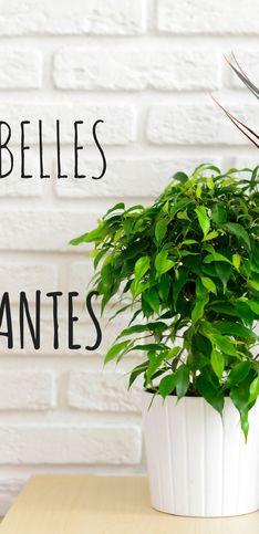 12 plantes dépolluantes à avoir chez soi