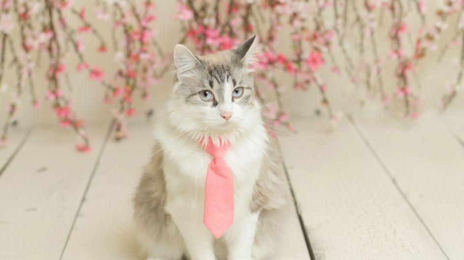 Cani e gatti con la cravatta: amici a quattro zampe pronti per l'ufficio!
