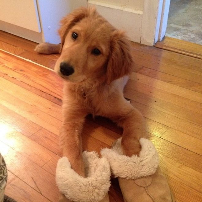 Cani con le scarpe: le foto più belle e divertenti!