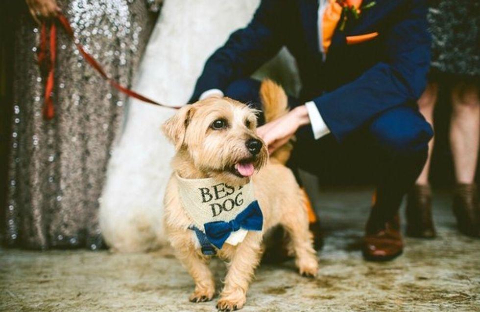 #Instadog: las mejores fotos de perritos participando en bodas