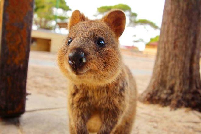 Cuccioli irresistibili: tutte le specie animali di cui innamorarsi