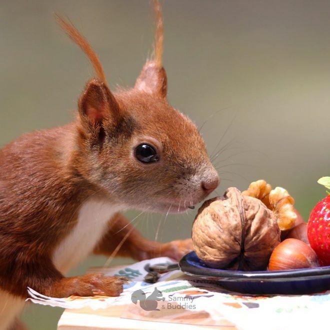 Frimousse d'écureuil 🍂