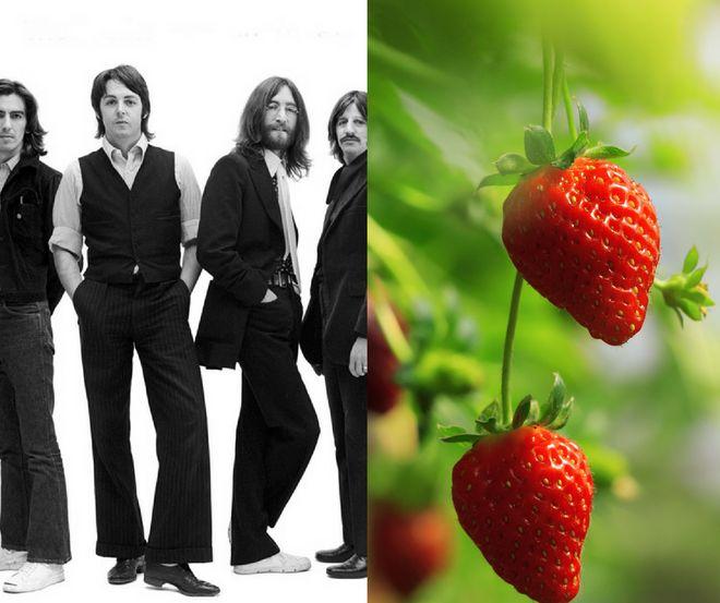 Les Beattles et les champs de fraises