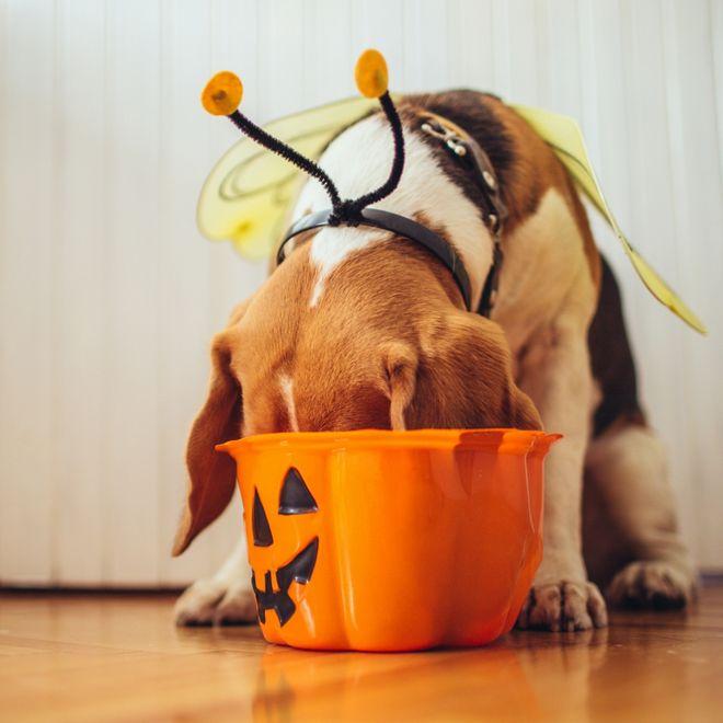 Costumi di Halloween per cani: ecco i più divertenti!