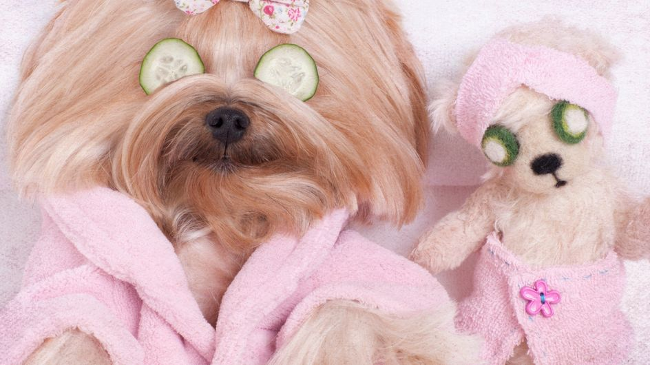 Nomi per cani femmine: i più belli per la tua cagnolina!