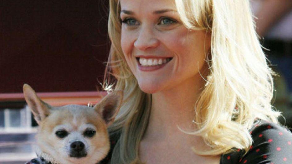 Quando il cane diventa vip: gli amici a 4 zampe delle star