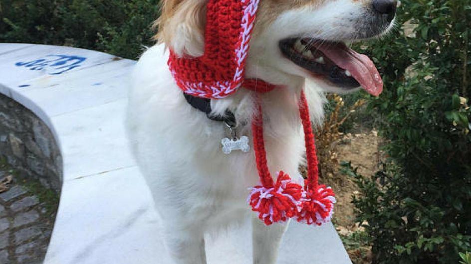 Regali di Natale per cani e gatti: idee originali per gli amici a quattro zampe