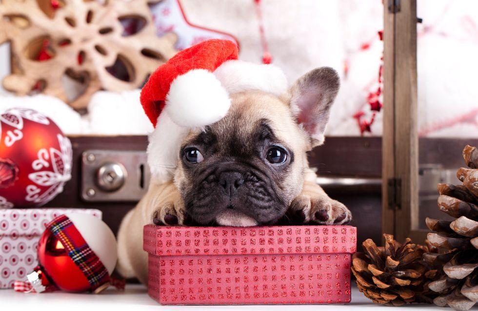 Regalos de Navidad para perros y gatos