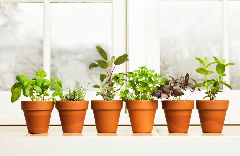 Foods that you can easily grow at home