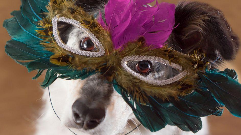 I costumi di Carnevale più belli per gli amici a 4 zampe