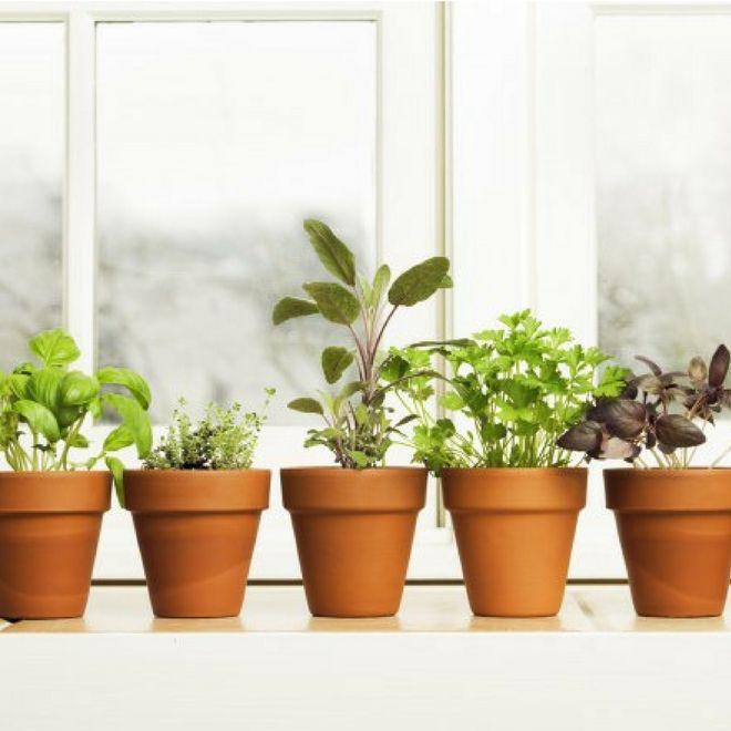 50 ortaggi che puoi coltivare direttamente a casa!