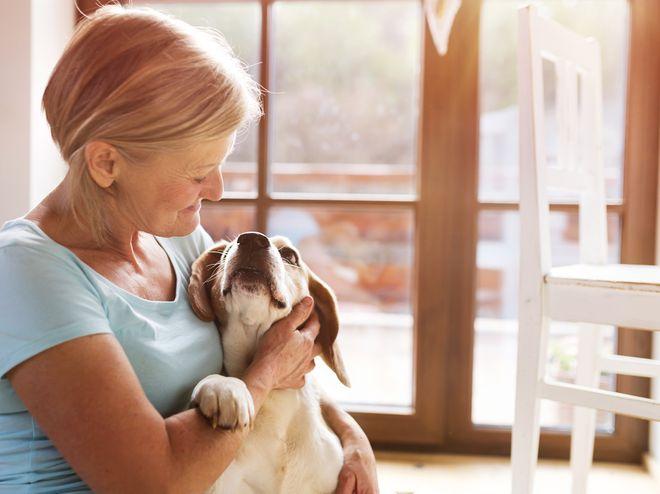 Perros ideales para personas mayores
