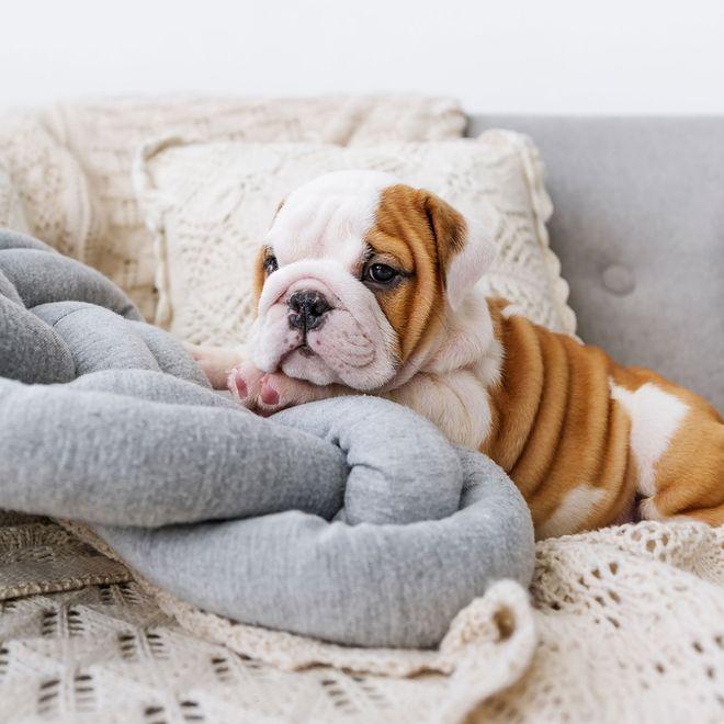 Die 10 beliebtesten Hunderassen in Deutschland