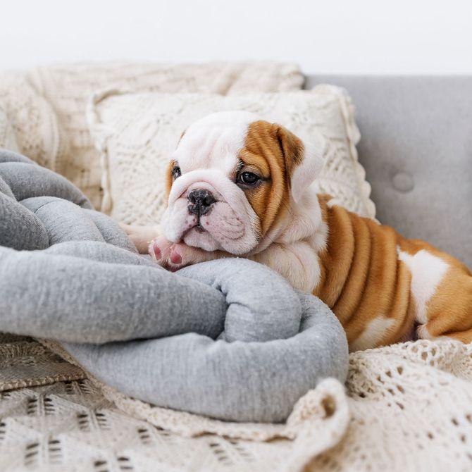 Beliebte Hunderassen in Deutschland