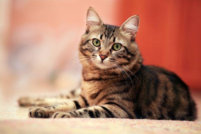 Siete vidas tiene un gato...