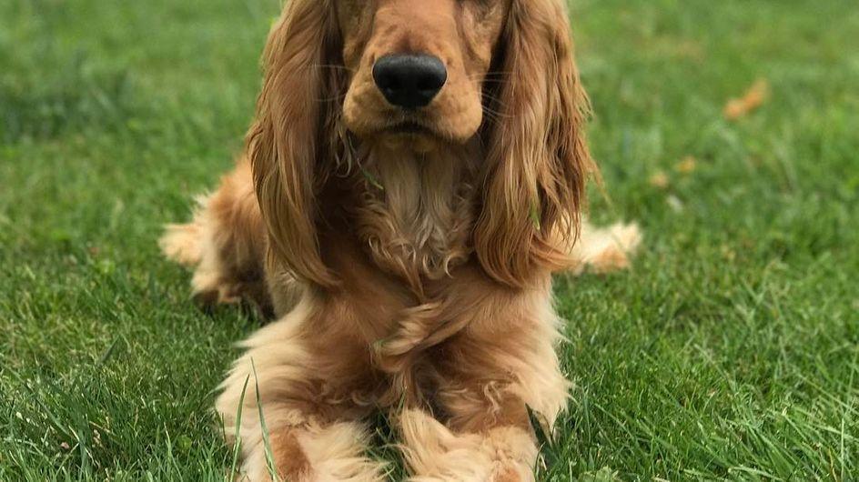 ¿Qué dice tu perro de ti?
